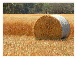 Hay Roll 2 by AdamsWife