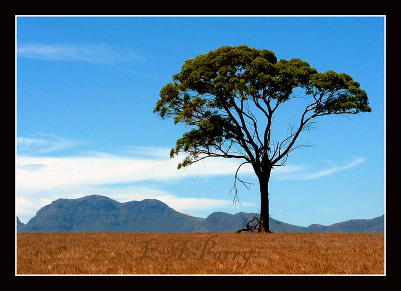 StirlingRangeWesternAustralia2 by AdamsWife