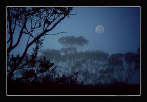 Moonlight by AdamsWife