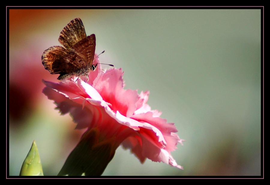 Brown Butterfly by AdamsWife