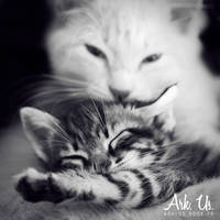 Cats love by Arkus83