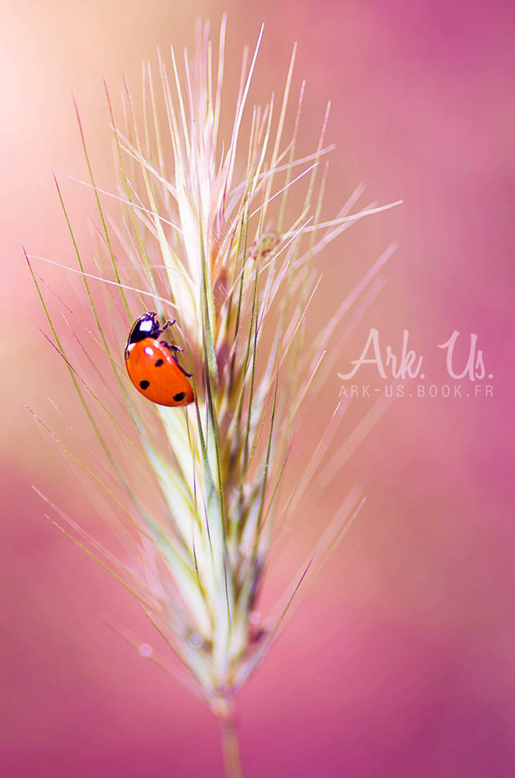 Cocci by Arkus83