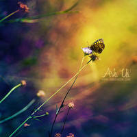 Fairy by Arkus83
