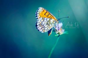 Touche coloree by Arkus83