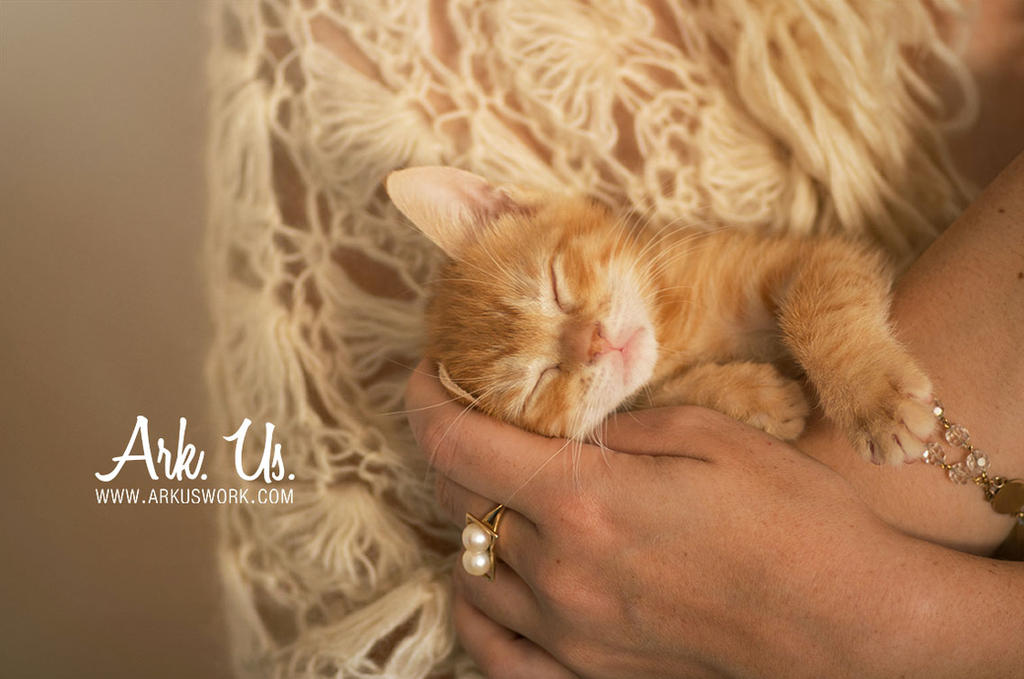 Sweet Kitty by Arkus83