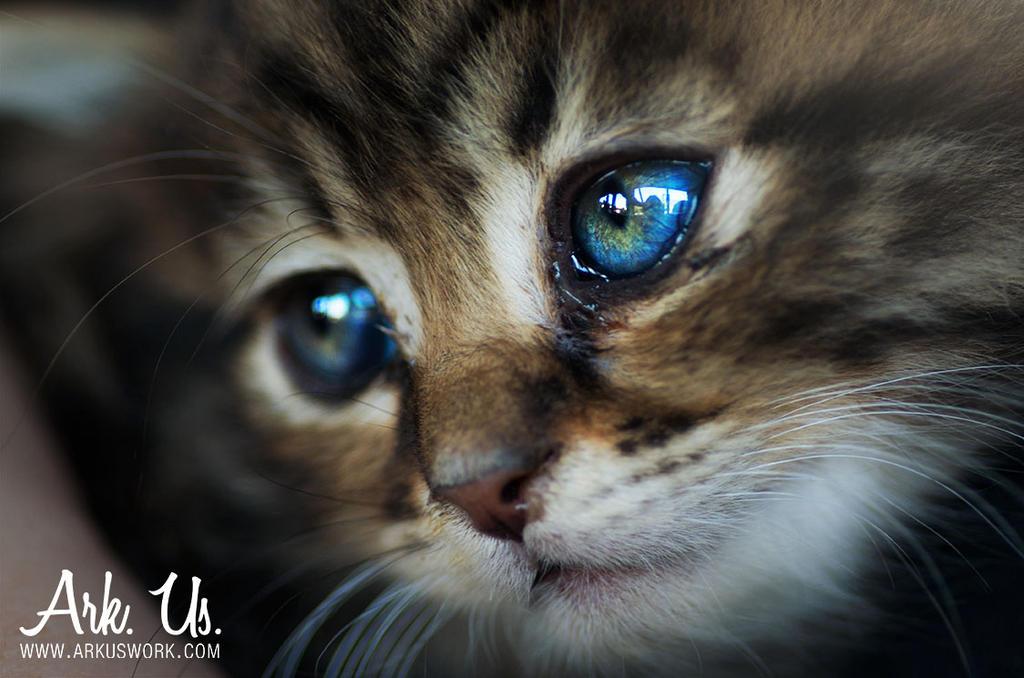 Boromir by Arkus83