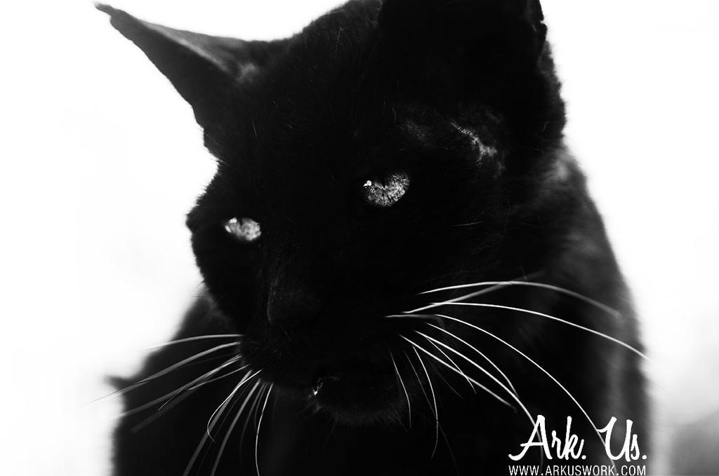 Le Mal-aime by Arkus83