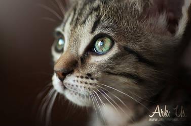 Nina portrait by Arkus83