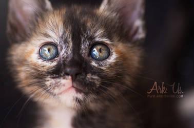 Aquarelle by Arkus83