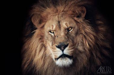 Lion by Arkus83