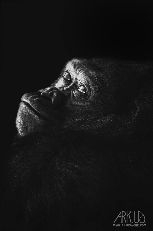Gorilla by Arkus83
