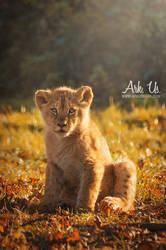 Lion cub by Arkus83