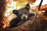 Bear cub by Arkus83