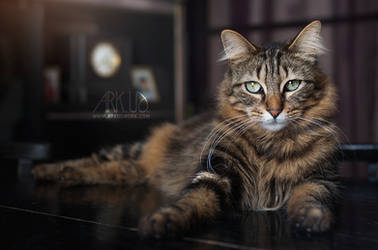 Pilou by Arkus83