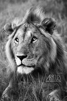King du Kenya