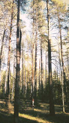 forest by Sempah