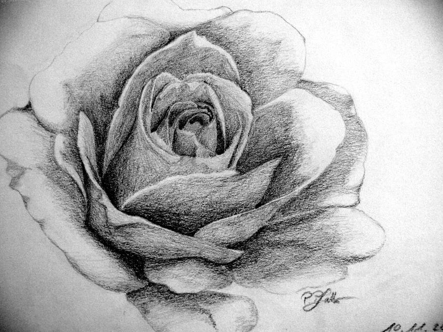 Black-White Rose