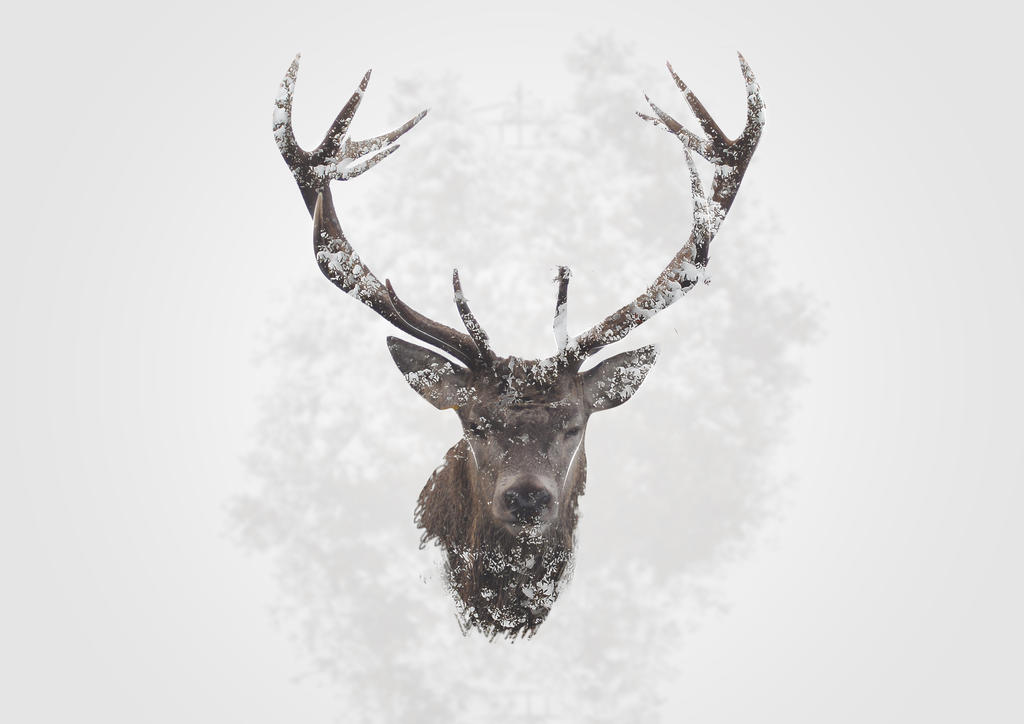 Winter Deer by VanDeForty4