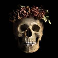 Skull by stuff-stock