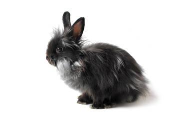 Rabbit isolated II