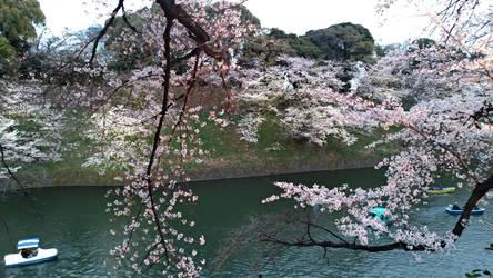 Kokyo Gaien National Garden 2019 0331-1 by agekei
