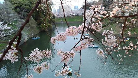 Kokyo Gaien National Garden 2019 0331-2 by agekei