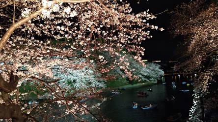 Kokyo Gaien National Garden 2019 0331-3 by agekei