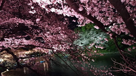 Kokyo Gaien National Garden 2019 0331-6 by agekei