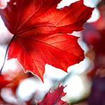 Scarlet Afternoon by jenarose