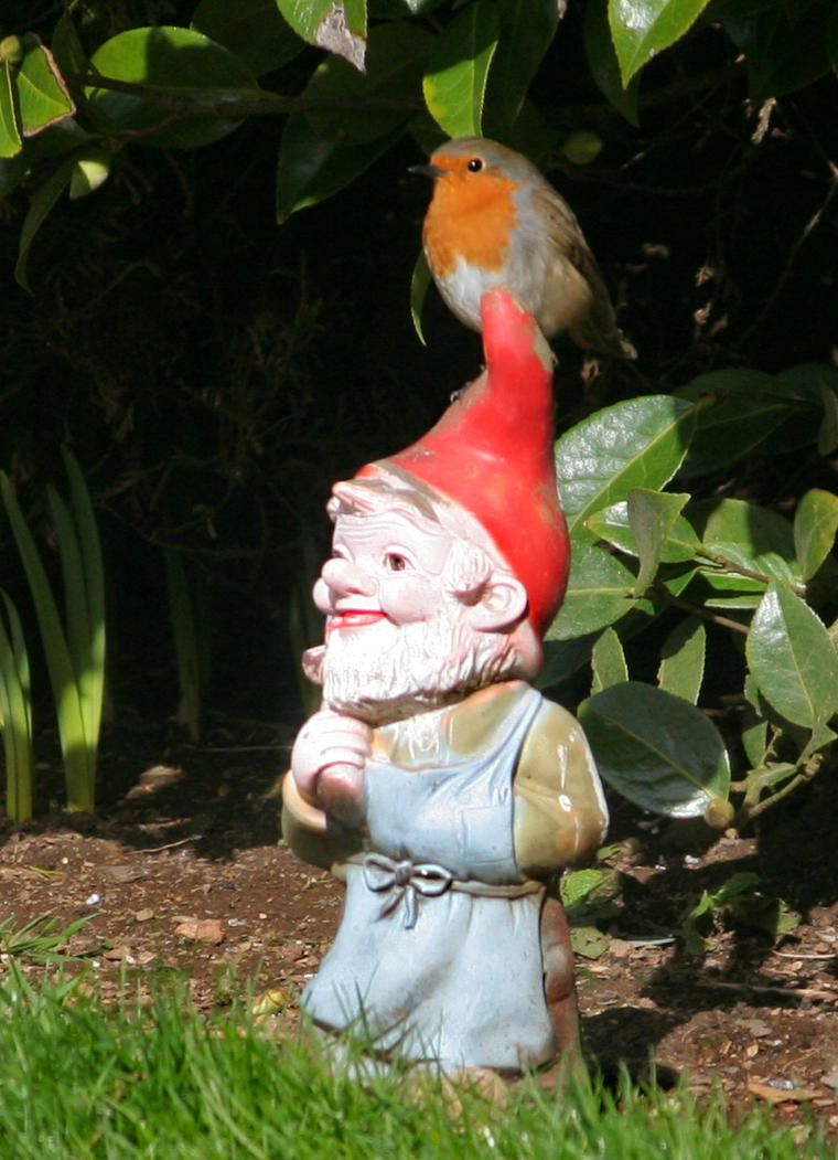 Robin on Gnome by nectar666