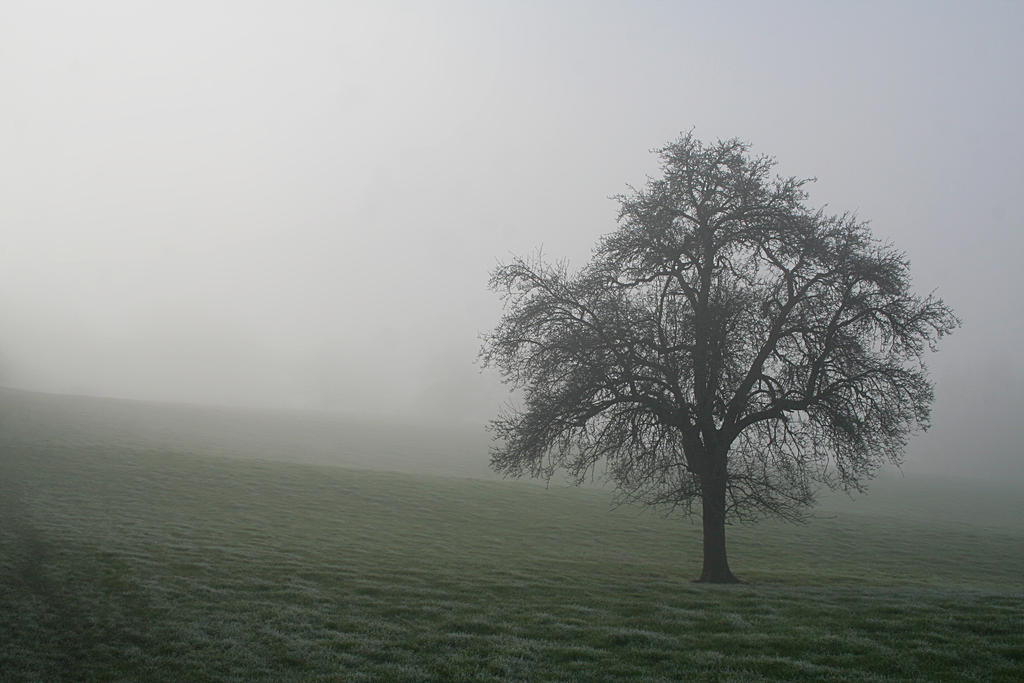 Another tree in the mist by nectar666