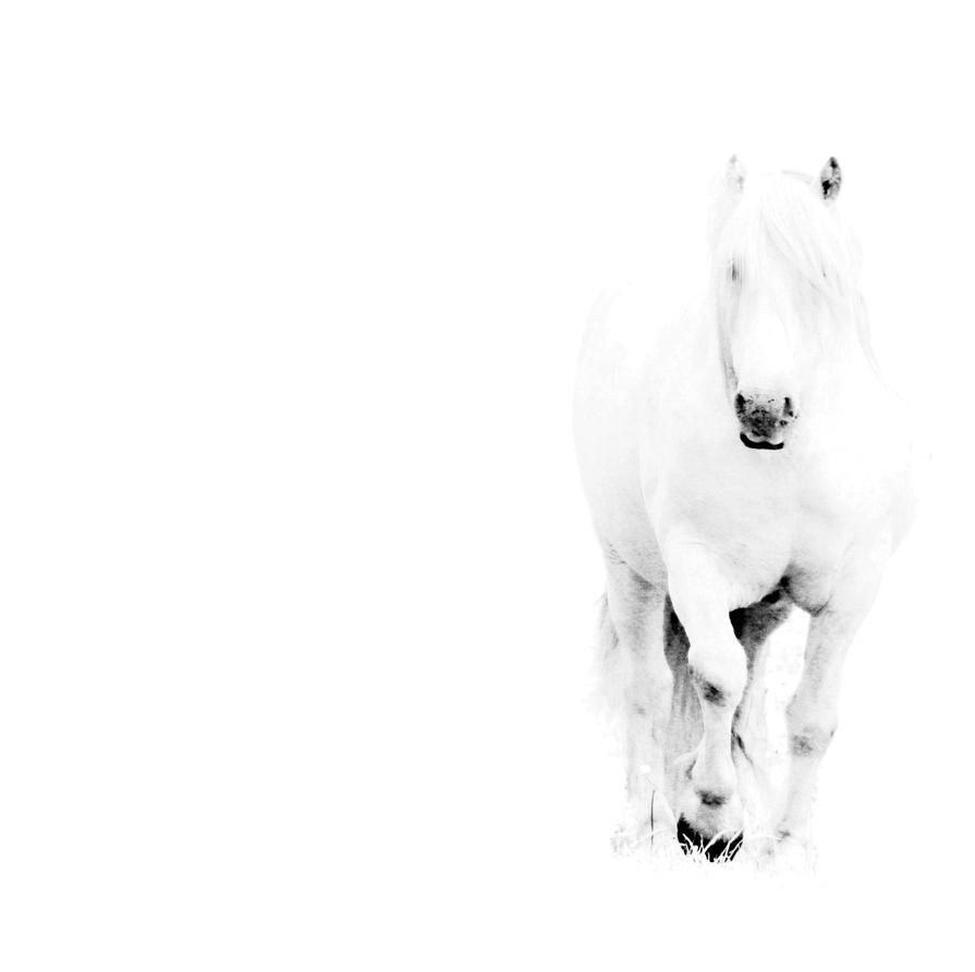White on White  by nectar666