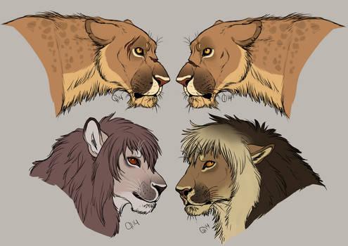Achidar Lions Revamp