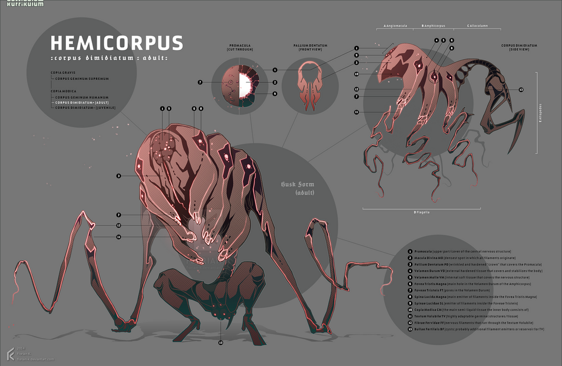 HemiCorpus: Husk by Florian-K
