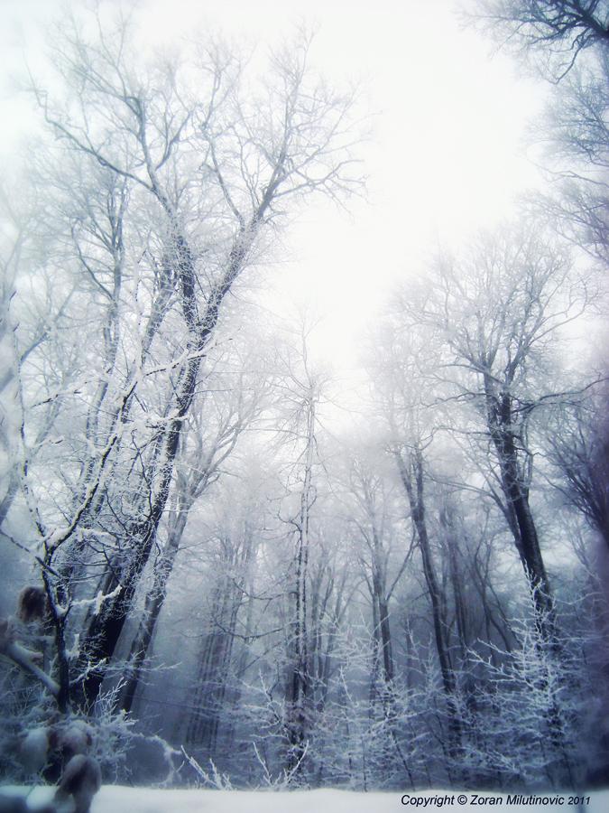Snowy Forest by ZoranPhoto