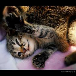Stop Tickling Me by ZoranPhoto