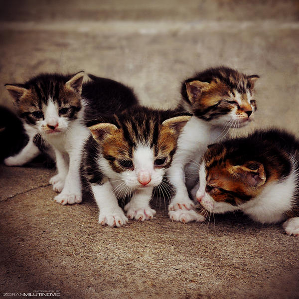 Cute Army by ZoranPhoto