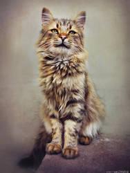 Fluffy - portrait by ZoranPhoto