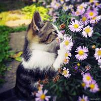 Flowers smells great by ZoranPhoto