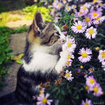 Flowers smells great