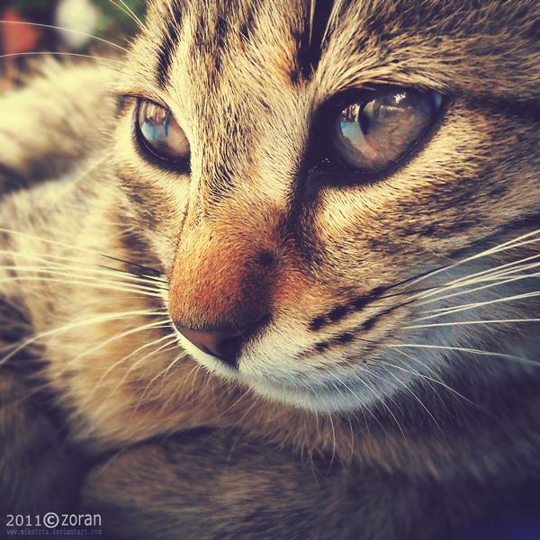 Thoughtful cat by ZoranPhoto
