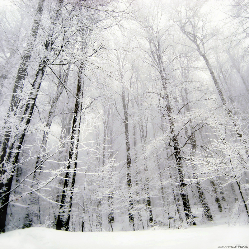 Into the White by ZoranPhoto