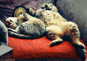 Crazy nap by ZoranPhoto