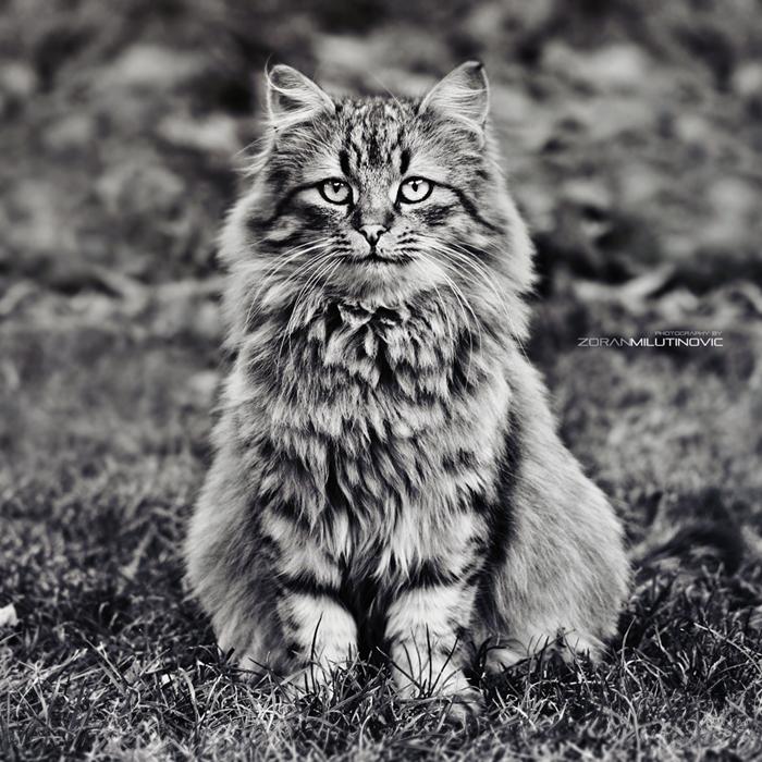 Mouse Slayer by ZoranPhoto