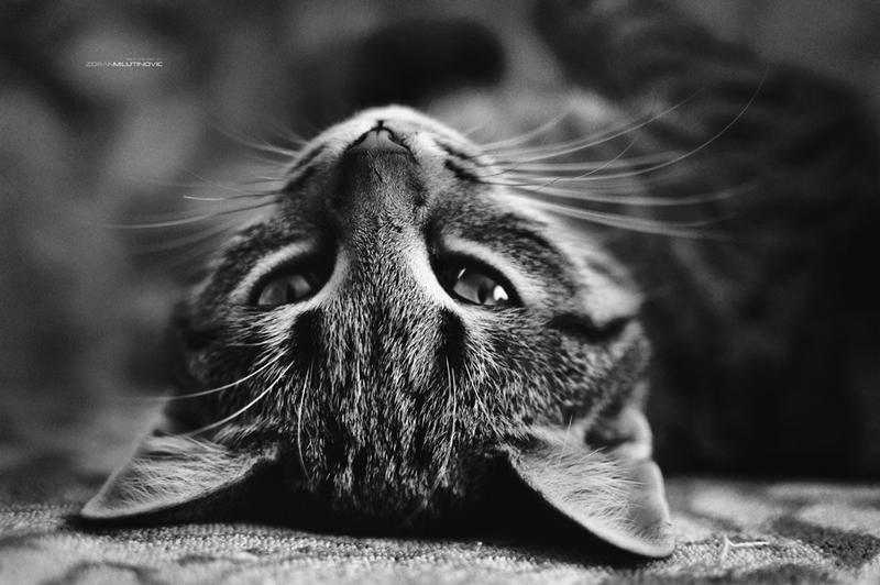 Upside-down mode by ZoranPhoto