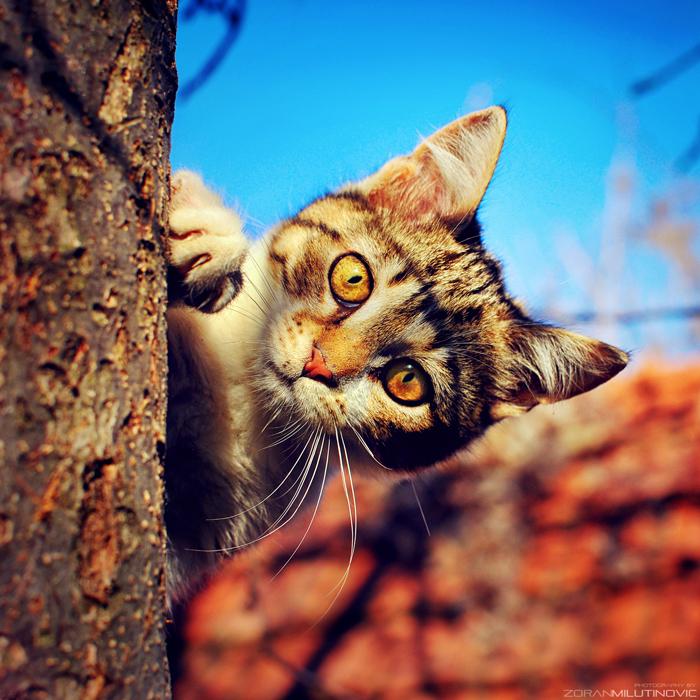 Hide and Seek by ZoranPhoto