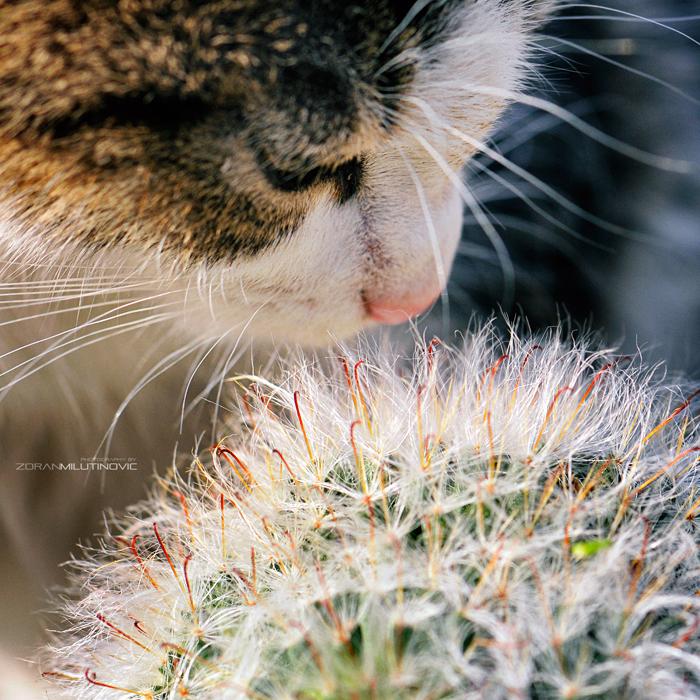 Risky smelling by ZoranPhoto