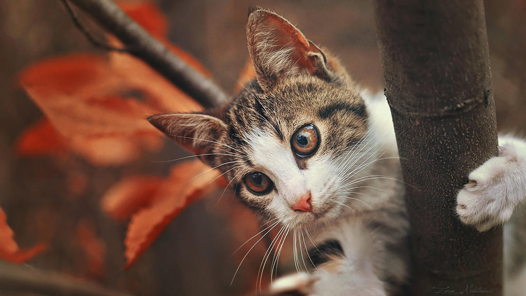 Autumn kitty by ZoranPhoto