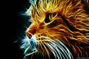 Fire Fluffy by ZoranPhoto