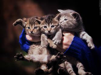 Bucket of cuteness by ZoranPhoto